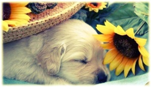 Dog in Spring