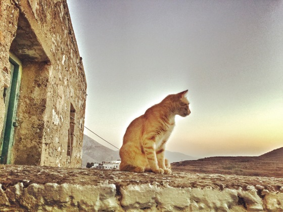 Stray Cat in Amorgos