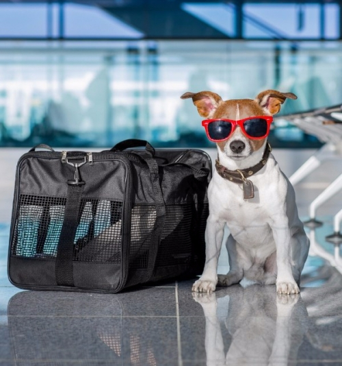 travelling-with-pets-1.jpg